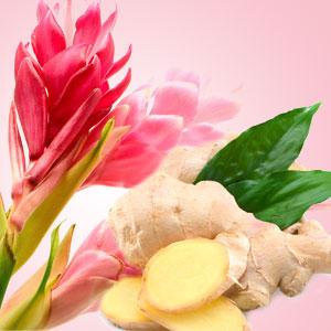 Ginger Aura Fragrance Oil Fragrance Oil Fragrance Wholesale Fragrance Oils