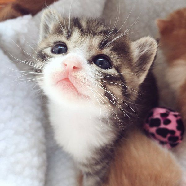 Oh my God, that face!