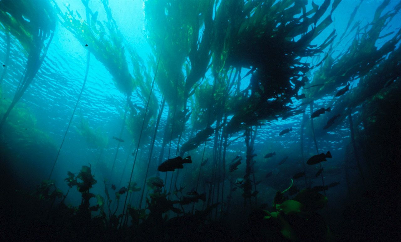 *What is seaweed?* Sea...