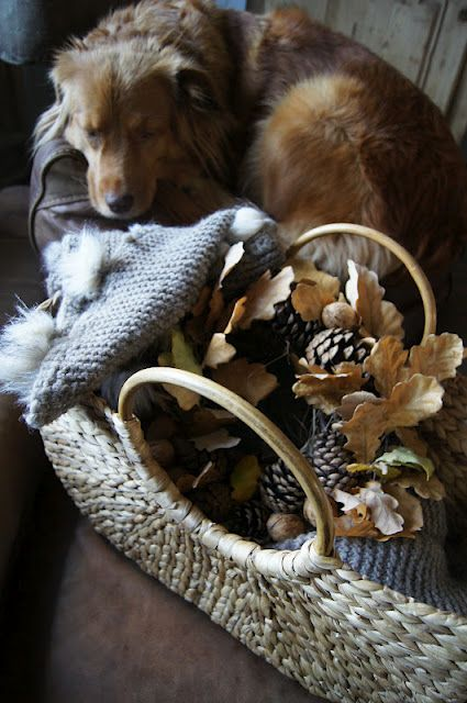 Puppy Fall: via White Wooden House Home