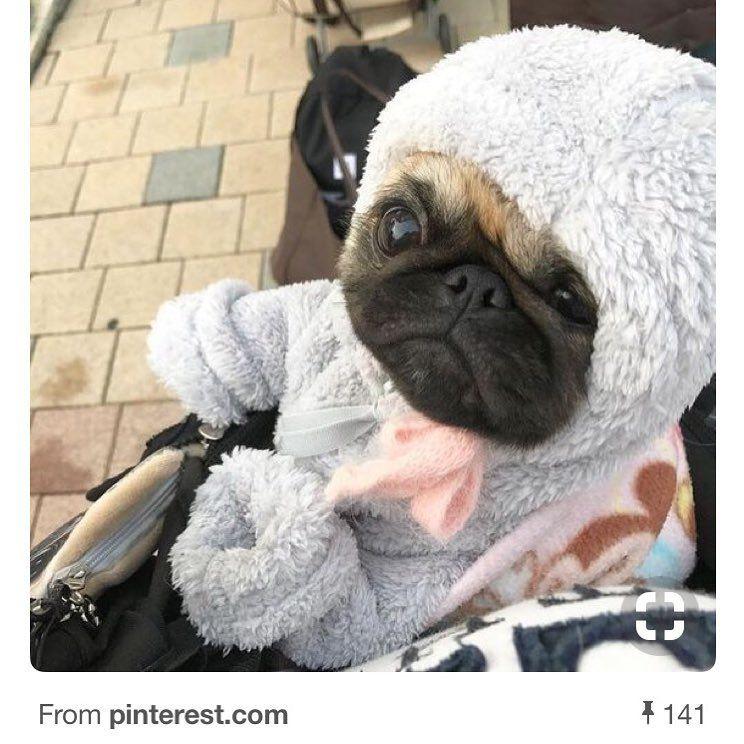 Pug Hot Dog Costume Google Search Pugs Pugs In Costume Dog