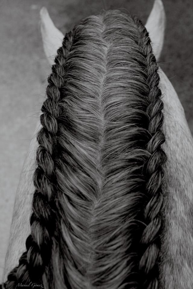 Carteret Wallet Hair Stuff Pinterest Horses Horse Braiding