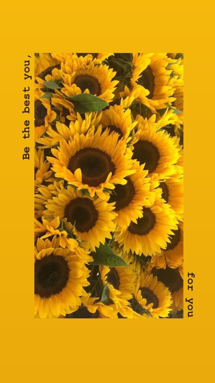 Pin by Fafa on 艺术 Sunflower wallpaper, Sunflower iphone