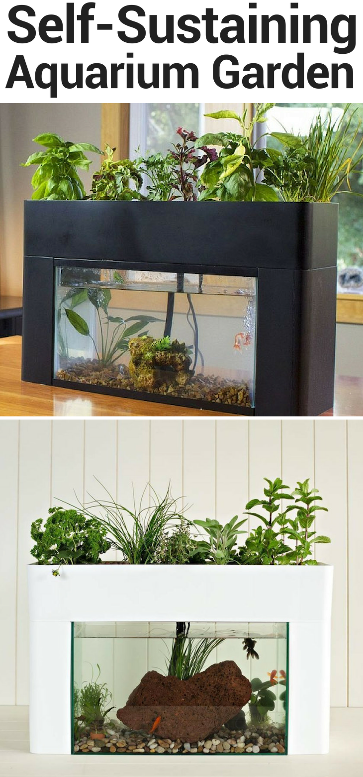 Self-sustaining aquarium herb garden & aquaponics kit for the home. Grow a variety of vegetables, herbs, greens and decorative plants all year long! #homedecor #gardening #garden #kräutergartendesign