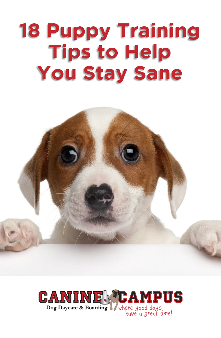 Pin on Canine Campus Articles for Dog Lovers