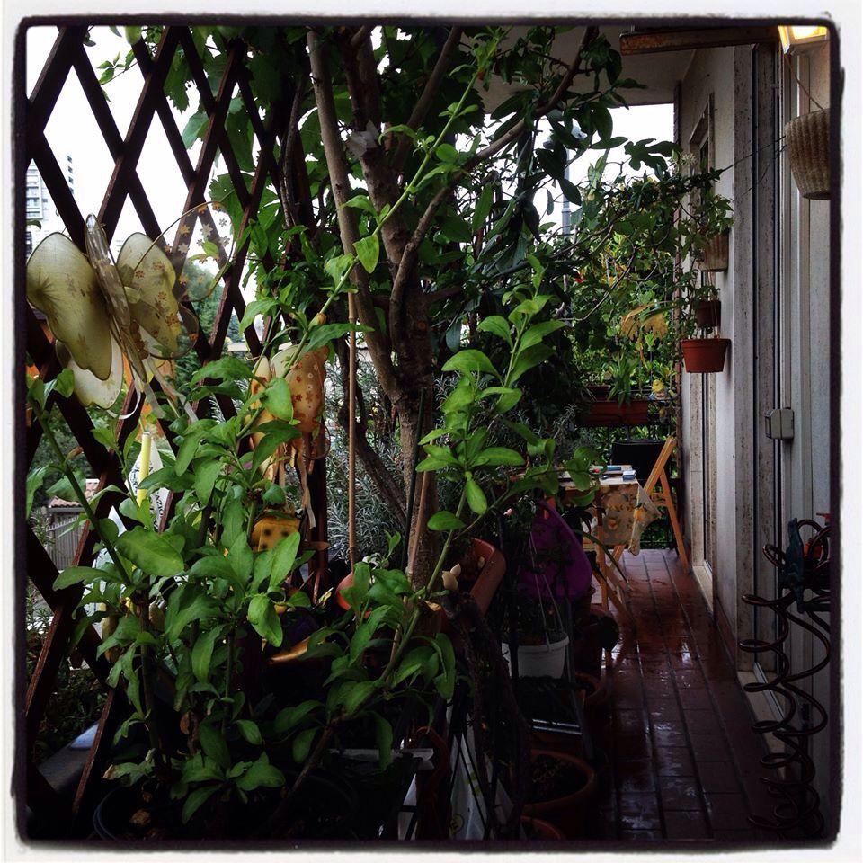 Balconi stretti e lunghi? Scegliete vasi stretti e alti con piante ...