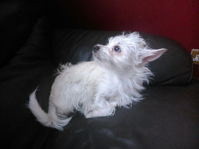 Little Tilly