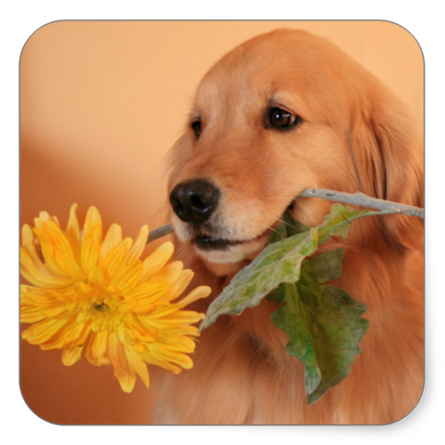 Golden Retriever With Flower Stickers Dogs