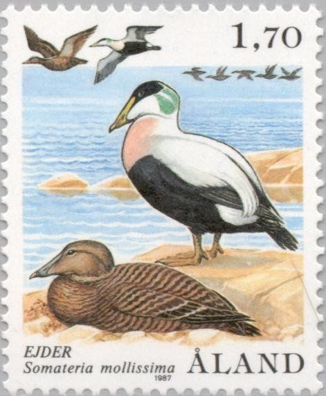 Stamp: Eider (Somateria mollissima) (Åland Islands) (Ducks) Mi:AX 20,Sn:AX 12,Yt:AX 20,AFA:AX 20,Un:AX 20