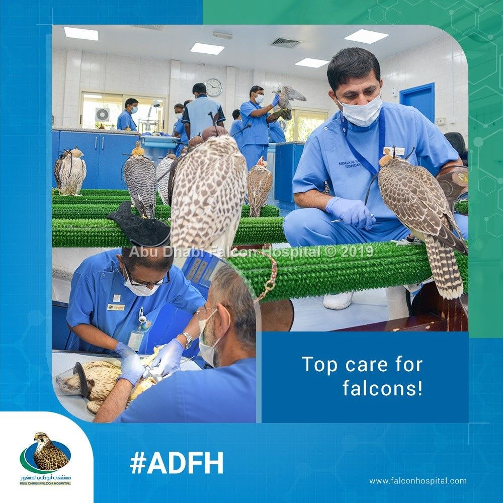 Adfh provides comprehensive healthcare and veterinary