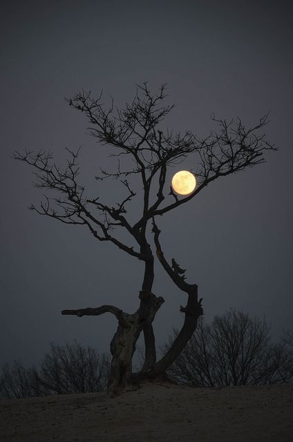 ✯ Loonse en Drunense Duinen by night