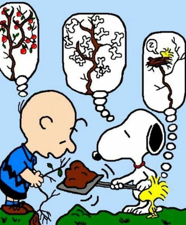 Oh Woodstock Snoopy Love Snoopy Snoopy Cartoon