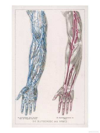 Image Result For Arm Vein Metal Diagrams The Fresh Ideas Pinterest