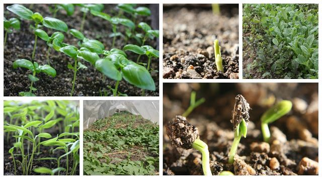Soil Temperature And Seed Germination With Images Seed