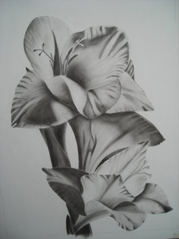 Pin By Ayshma On My Art Flower Drawing Drawings Gladiolus Flower Tattoos