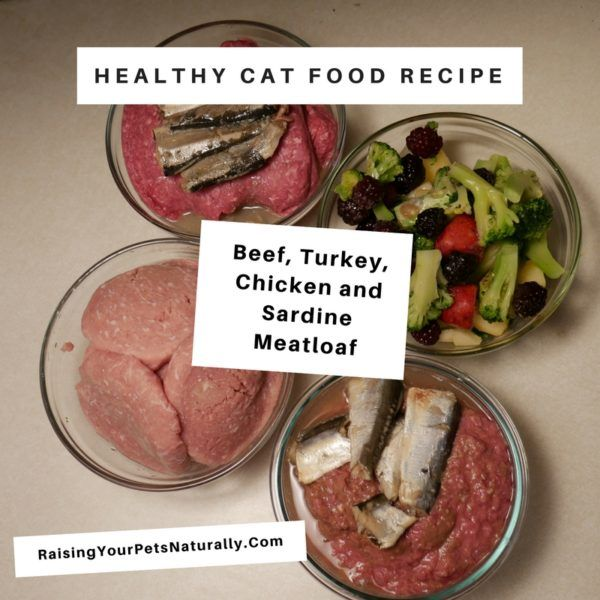 raw meat diet recipes for homemade cat food