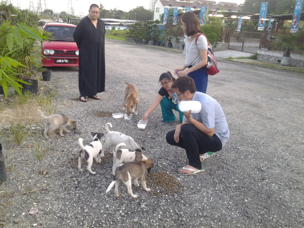 Stories from a Chela Blessing the Animal Realm Animals