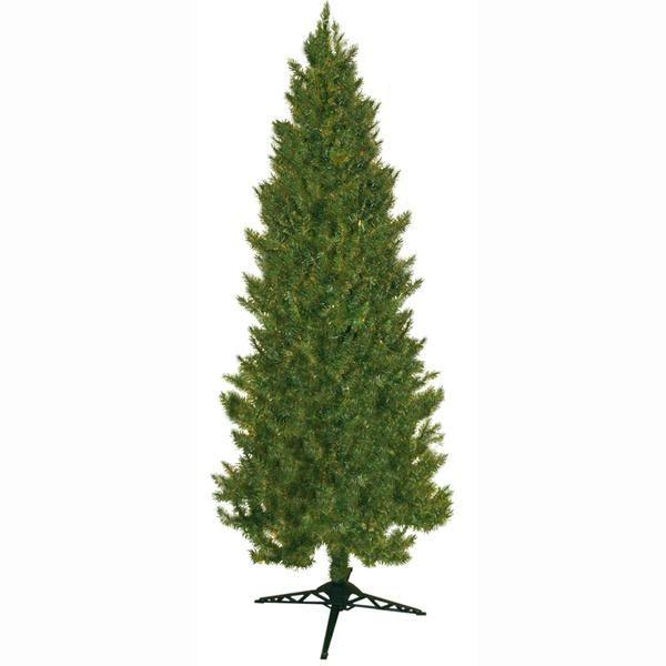 7' Green Slim Spruce, $75 sears