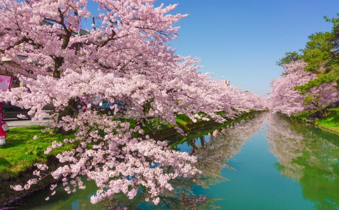 Italy Voted No1 Loveliest Country In The World This Is Italy Page 7 Cherry Blossom Japan Japan Cherry Blossom