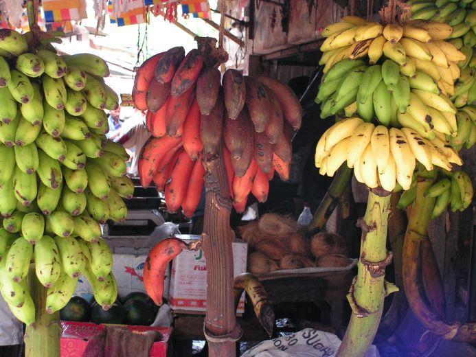 Afbeeldingsresultaat voor alle soorten bananen