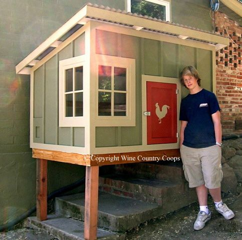 Large View Shed 6 Chicken Coop Decor Chickens Backyard Urban Chicken Farming