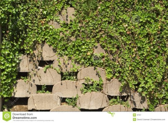 Retaining Wall With Ivy Ivy Wall Wall Outdoor Decor