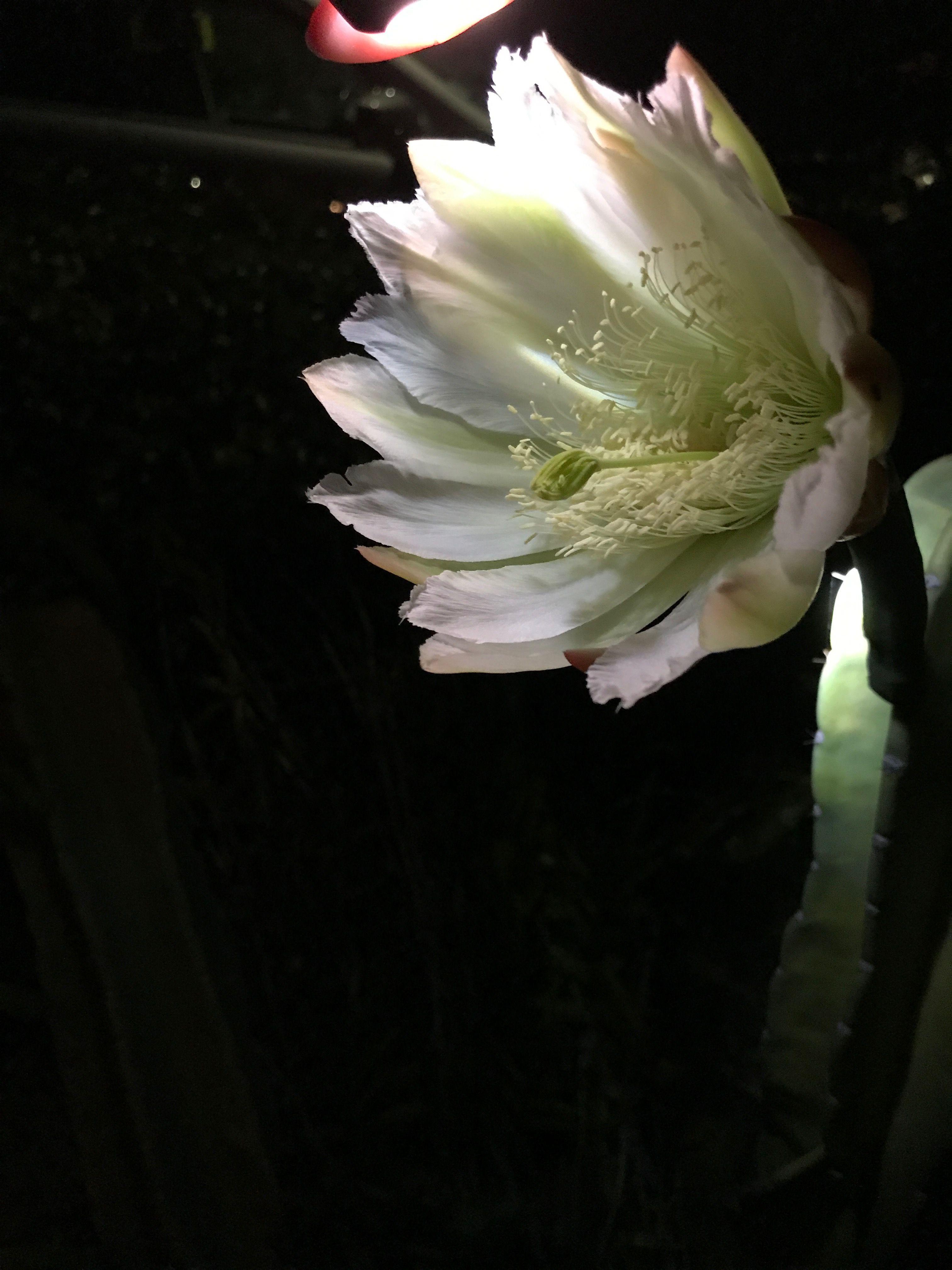 Night time bloom Bloom, Garden, Night time