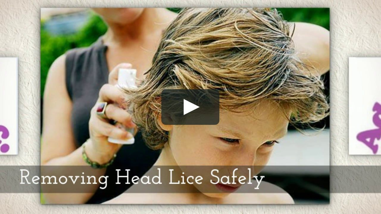 Lice Treatment Service | Head Lice Removal VA | Head Lice Treatment DC | Advice on Lice #headlicetreatment Lice Treatment Service | Head Lice Removal VA | Head Lice Treatment DC | Advice on Lice #headlicetreatment Lice Treatment Service | Head Lice Removal VA | Head Lice Treatment DC | Advice on Lice #headlicetreatment Lice Treatment Service | Head Lice Removal VA | Head Lice Treatment DC | Advice on Lice #headlicetreatment Lice Treatment Service | Head Lice Removal VA | Head Lice Treatment DC | #headlicetreatment