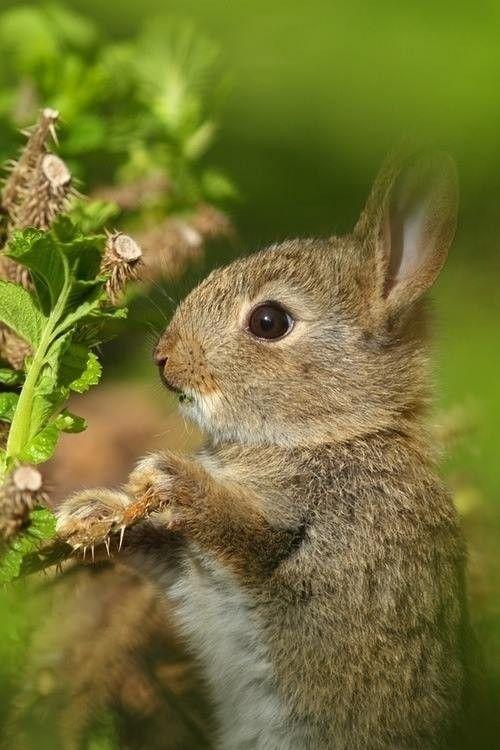 Наши друзья Lil кроликов.