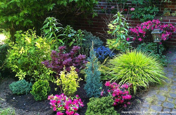 Dwarf Conifer Garden Design Ideas For Front Yard | Dwarf Conifers, Dwarf  Japanese Maples, Japanese Forest Grass, Azaleas .