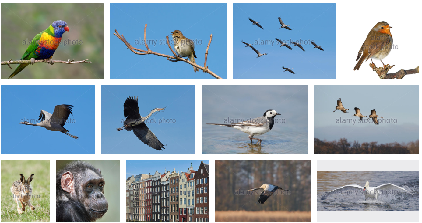 Visit my portfolio and support my work @Alamy: #dennis #jacobsen #microstock #images #photos #wildlife #animal #bird http://www.alamy.com/search/imageresults.aspx?pseudoid=%7b401A93C2-F23F-4109-90EA-A5AE8F7FA094%7d&name=Dennis+Jacobsen&st=11&mode=0&comp=1