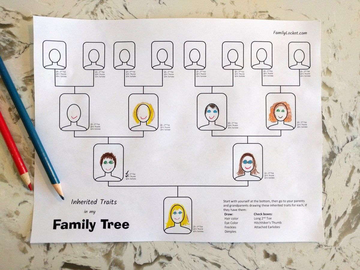 Inherited Traits Family Tree Worksheet