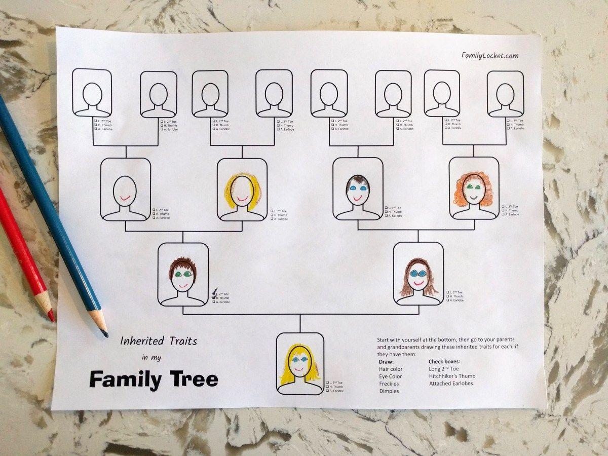 Inherited Traits Family Tree Worksheet Family tree