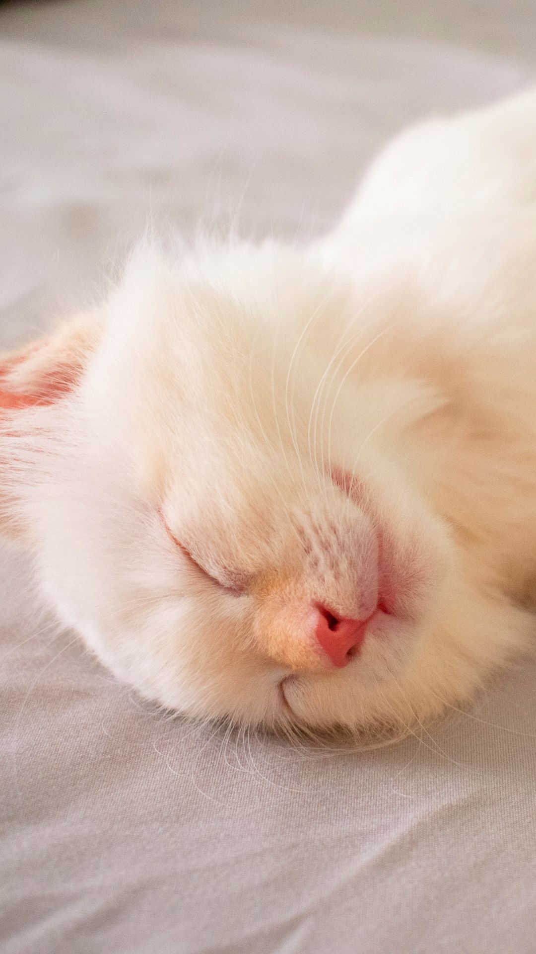 How Old Is My Cat In Human Years Sleeping Kitten Cute Cats And Kittens Cute Animals
