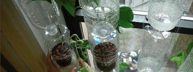 Irrigação por gotejamento com garrafas pets                                                                                                                                                                                 Mais