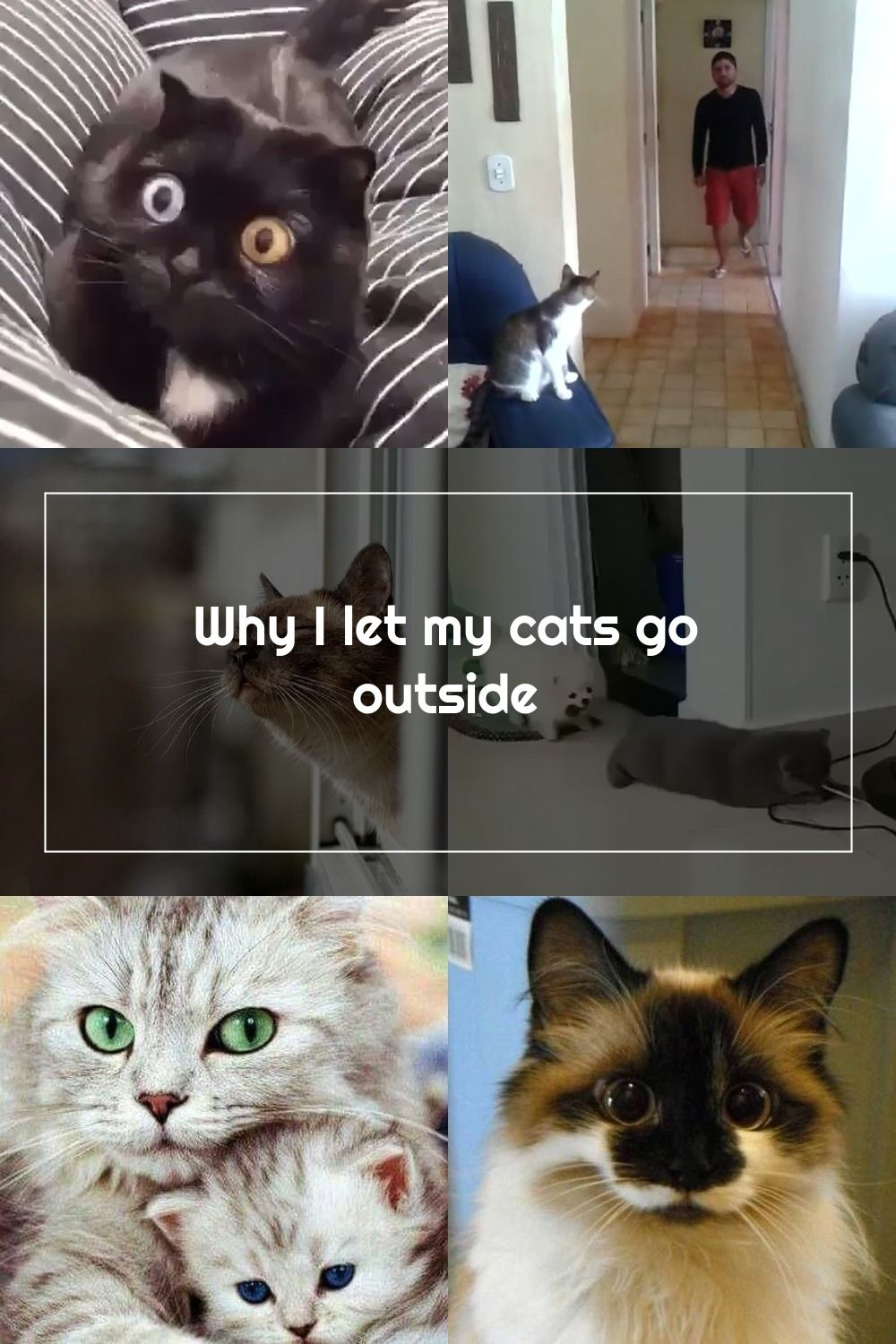 Why I Let My Cats Go Outdoors In 2020 Cats Cute Cats Go Outdoors
