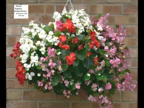 Hanging Basket Ideas