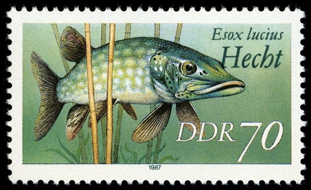 Pin by huseyin ali afsaroglu on stamps german stamps