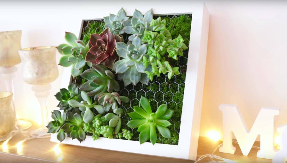 cadre v g tal avec plantes grasses ikea tableau de succulentes bidouilles ikea cadre. Black Bedroom Furniture Sets. Home Design Ideas