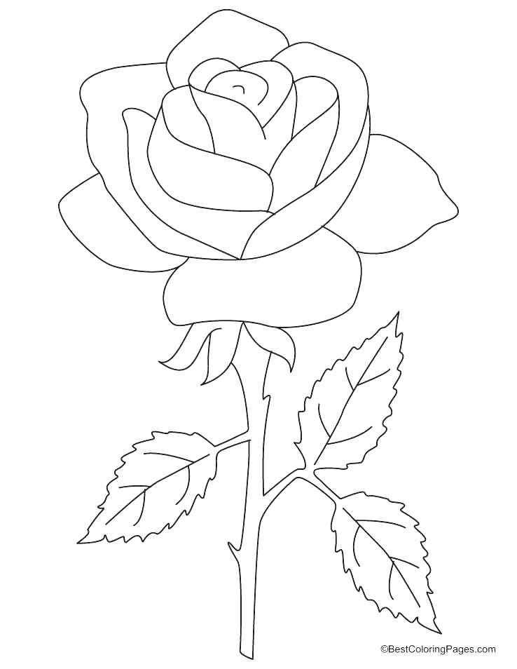 Rose Flower Coloring Page Colouring Picture Of Rose Nice Rose