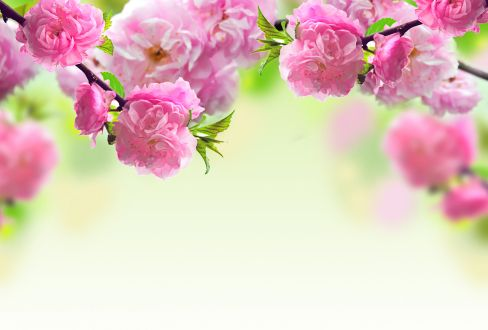 Beautiful pink spring flowers images flower meanings hd desktop beautiful pink spring flowers images flower meanings hd desktop wallpaper mightylinksfo