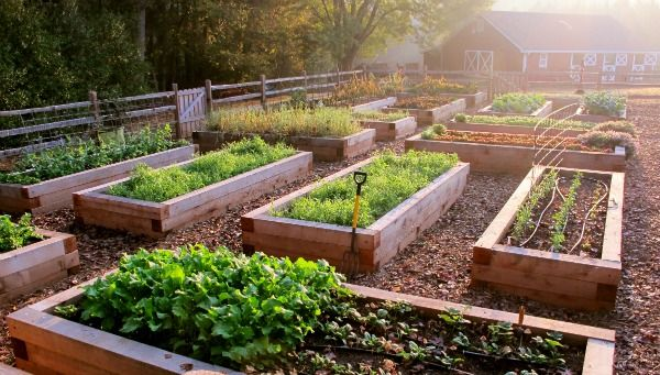 Exciting News Ryg Is Joining The Growing A Greener World Team Redeem Your Ground Rygblog Com Raised Garden Beds Garden Beds Ideal Gardens
