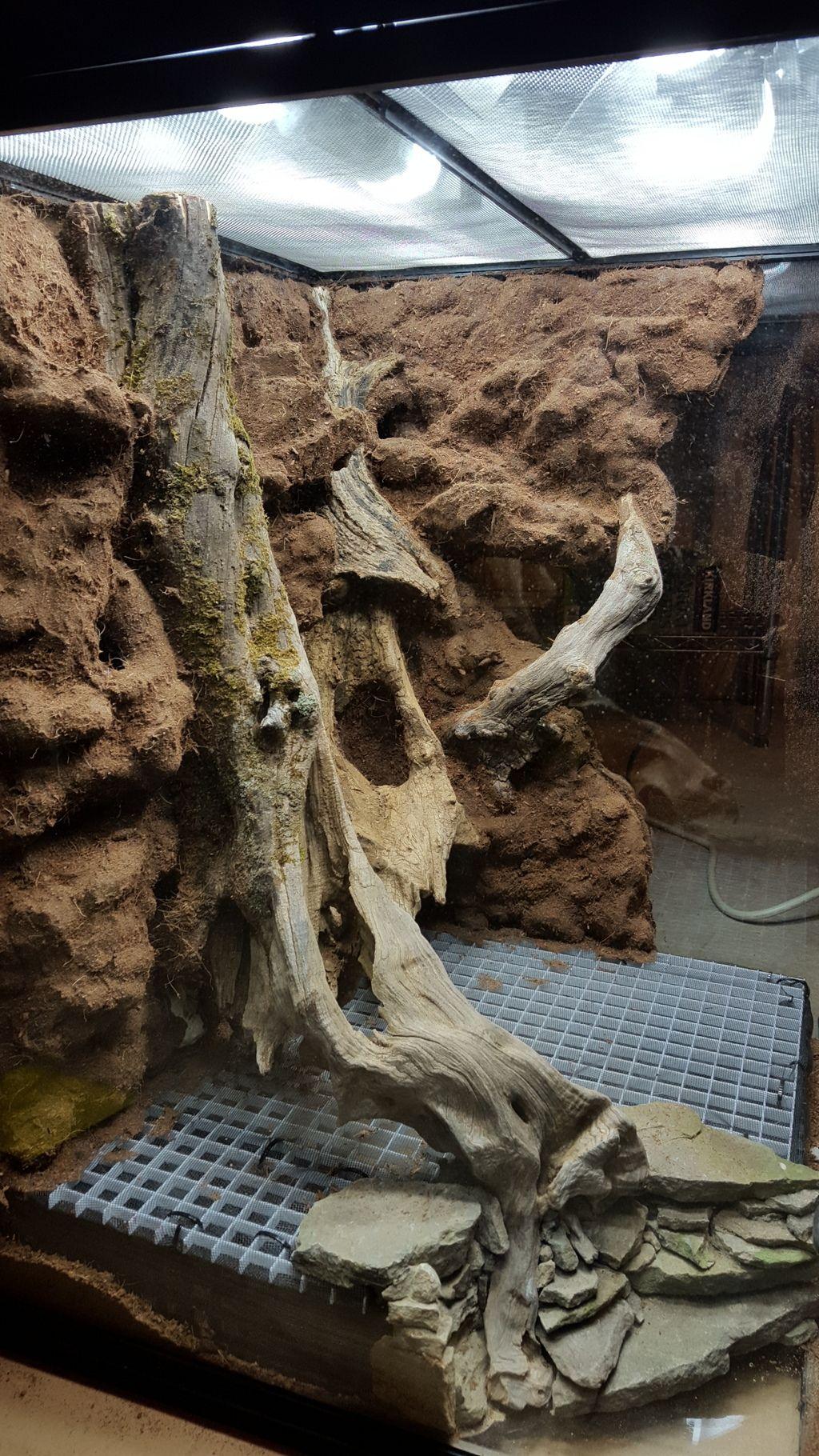 18x18x24 Twisted Root Build Dendroboard Reptilienhaltung Terrarien Reptilien