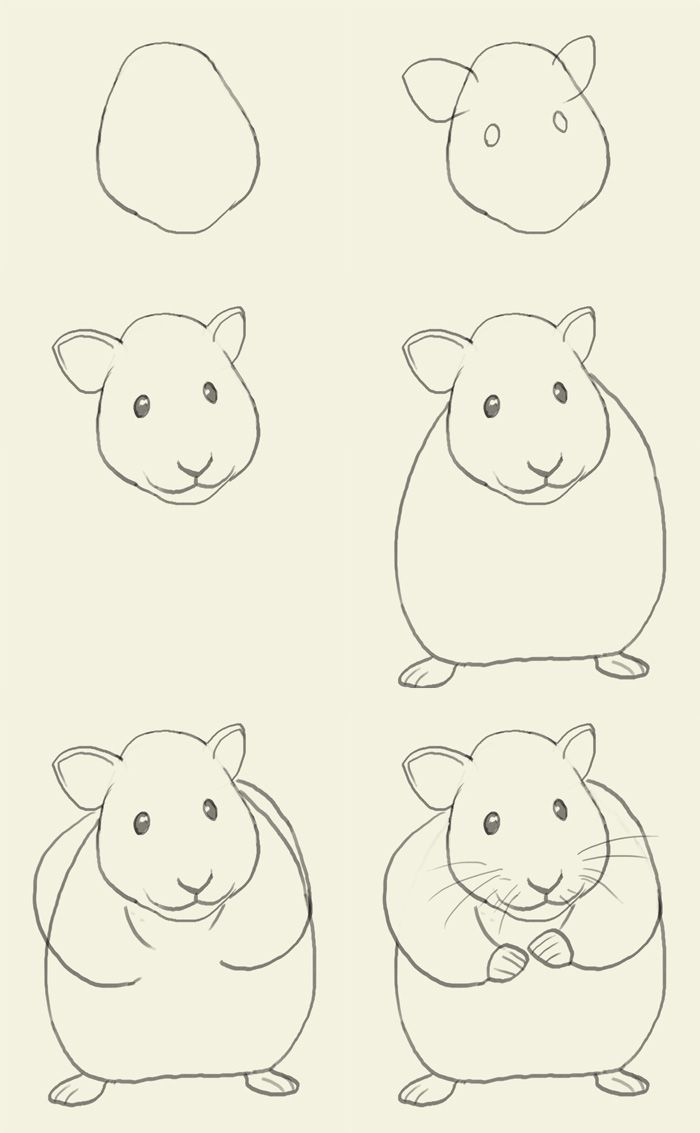 A Hamster For Connor Bc He Loves To Draw Easy Drawings