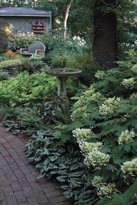 Faire face à l'ombre sèche   Shade garden design, Backyard ...