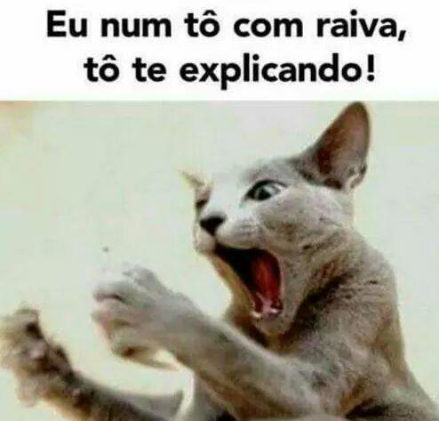 A Imagem Pode Conter Gato E Texto Frases De Rir Frases