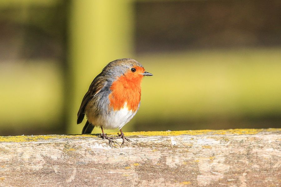 Robin by Linda Martin on 500px