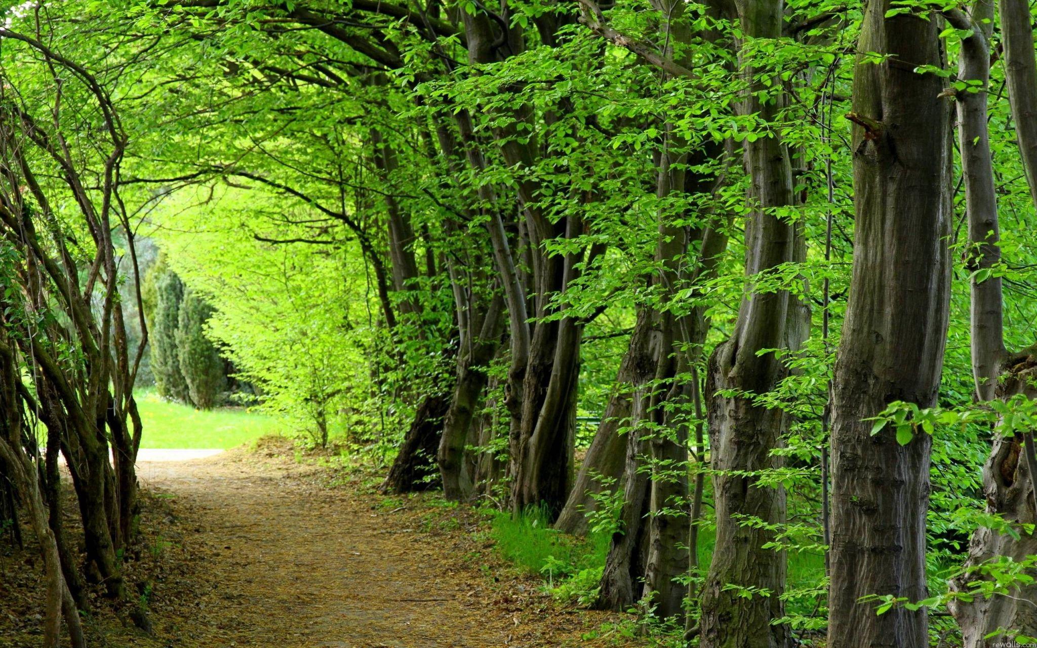Forest Backgrounds For Desktop Hd Backgrounds Forest Wallpaper Nature Desktop Summer Trees