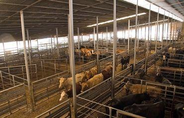 sale barn in Groesbeck, Texas  | Team Beef | Ranch life
