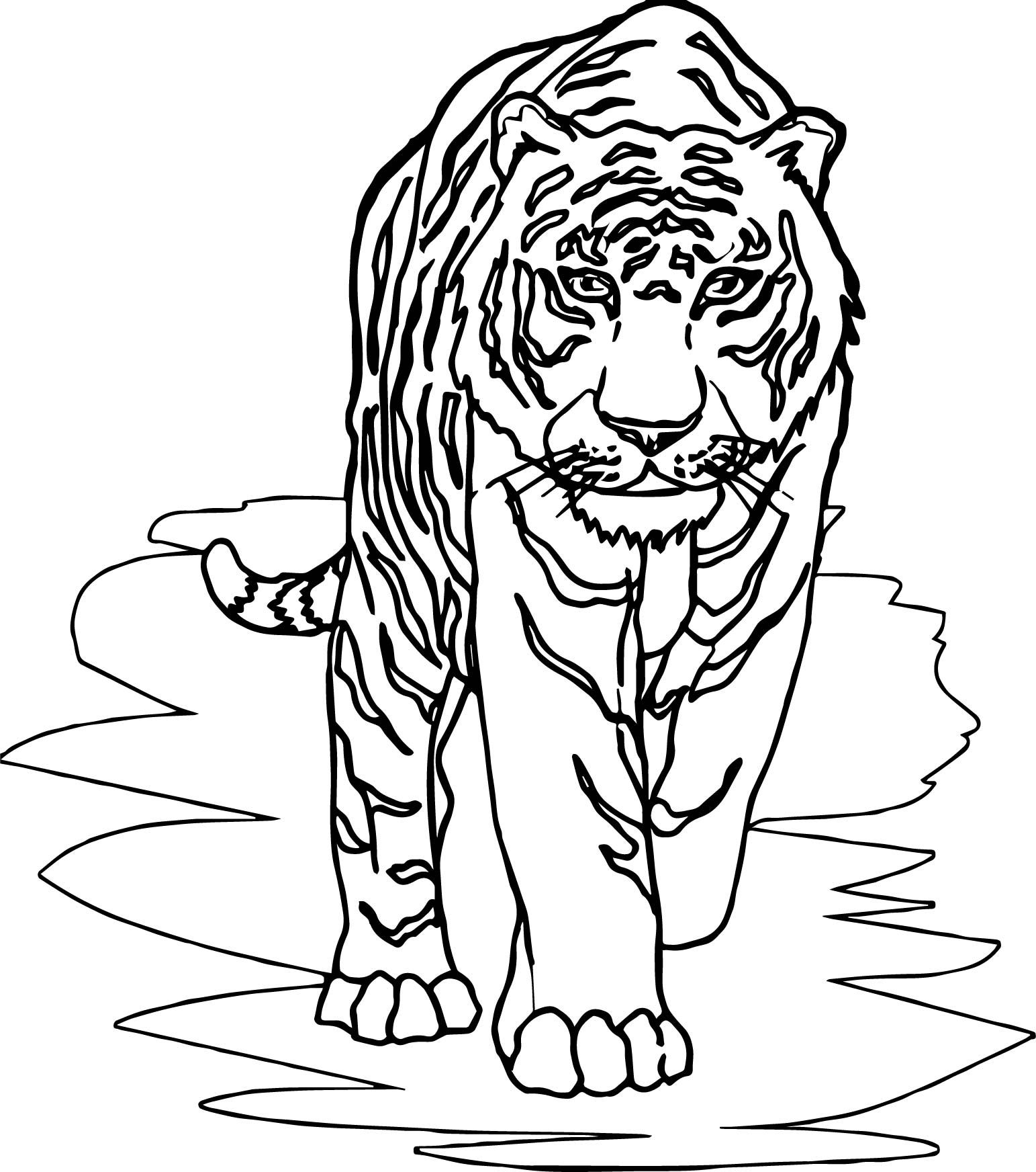 Cool Tiger Front Walking Coloring Page